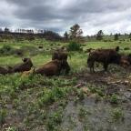 Wild, Wild West 2018 – Custer State Park